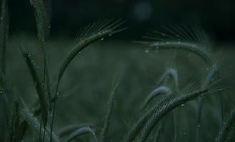 hinter Walsleben ist wieder Getreideland pur