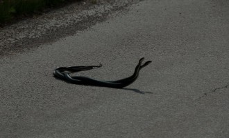 Schlangentanz kurz vor Jelovice
