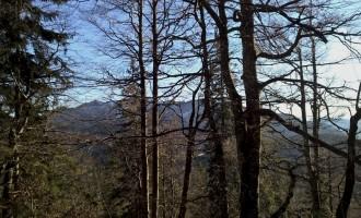 Wir stehen im Wald! Aufstieg vom Spitzingsee