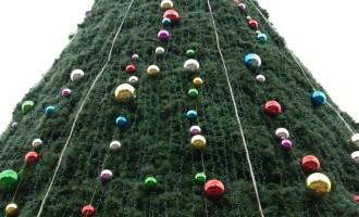 Weihnachtsbaum Kiwi-style in Hamilton