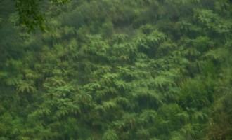 entlang des Awakino Rivers westwärts, im strömenden Regen