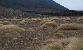 tussock grass überlebt als einziges Gewächs im South Crater