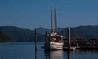 Idylle am Picton Harbour in aller Herrgottsfrühe