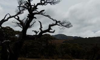 Aufstieg zur Lake Sylvester Hut: bizarr geformte mountain beech