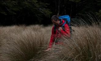 ...und tussock grass, vom Neo-Botaniker bestaunt!