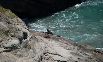 tief unten lagert die Seehundfamilie
