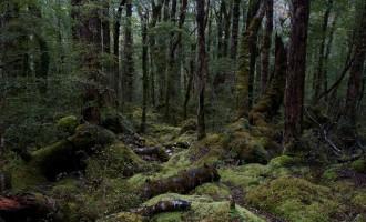 Rahu Saddle: regennasser Aufstieg durch´s Moos zum Klondyke Spur