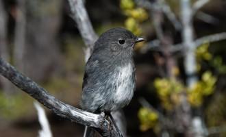 Alborn´s Coal Mine: Tiere und Pflanzen erobern sich die Natur zurück