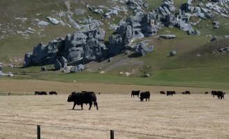 Maori-Kultstätte: Castle Hill