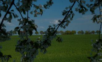 Blick aus der Kirschenalle auf die Laubbaumallee bei Bossdorf