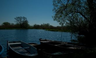 Rast an der Havel im Milower Land (bei Bützer)