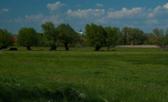 im Havel-Sumpfland bei Jederitz: Störche, Reiher, Kraniche finden reiche beute