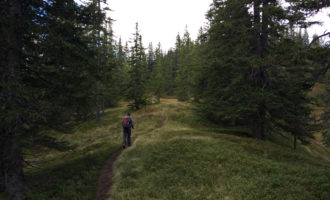 Am Nieder-Berg, dem Heidelbeer-Paradies schlechthin.