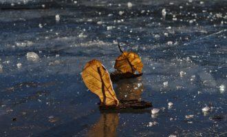 Blätter-Boote am Möserer See
