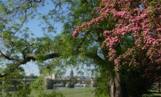Unweit des Rosengartens