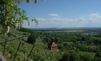 Im Königlichen Weinberg über Pillnitz