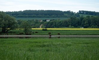 Idylle an der Elbe gegenüber von Coswig