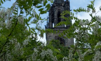 Blick von der Altstadt zum Dom durch die Robinien