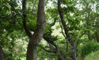 Reste vom ursprünglichen Lorbeerwald stehen in den hintersten Winkeln