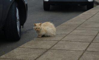 scheue Katzen streunen hin und wieder herum