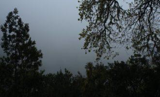 trotz Regen eine wunderschöne Stimmung im Lorbeerwald