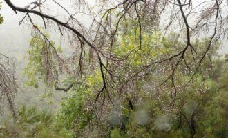 es tropft aus allen Blättern und Nadeln - wir sind immerhin im Regenwald