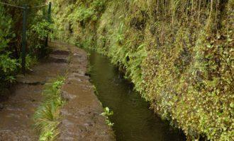Levada do Risco: auch aus den Steilwänden rinnt das Wasser direkt hinein