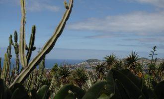 Botanischer Garten Funchal: Weiterblättern ab jetzt nur noch für Botanik-Fans empfehlenswert :)