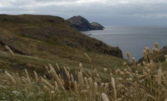 steppenartige Vegetation auf der östlichsten Landzunge