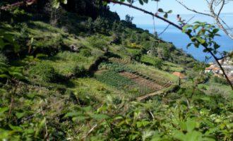 ländliche Idylle abseits der Touristen an der Levada do Norte