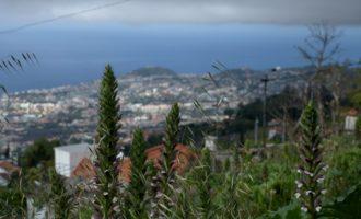 am höchsten Punkt in Monte-Funchal, wo die letzten Häuser stehen