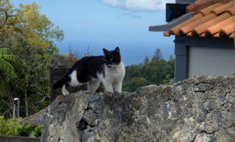 die kaiserliche Katze...Kaiser Karl ist in der Nähe begraben, in der Kirche in Monte
